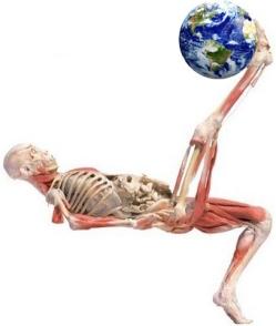 O corpo humano é um sistema, assim como o nosso planeta.